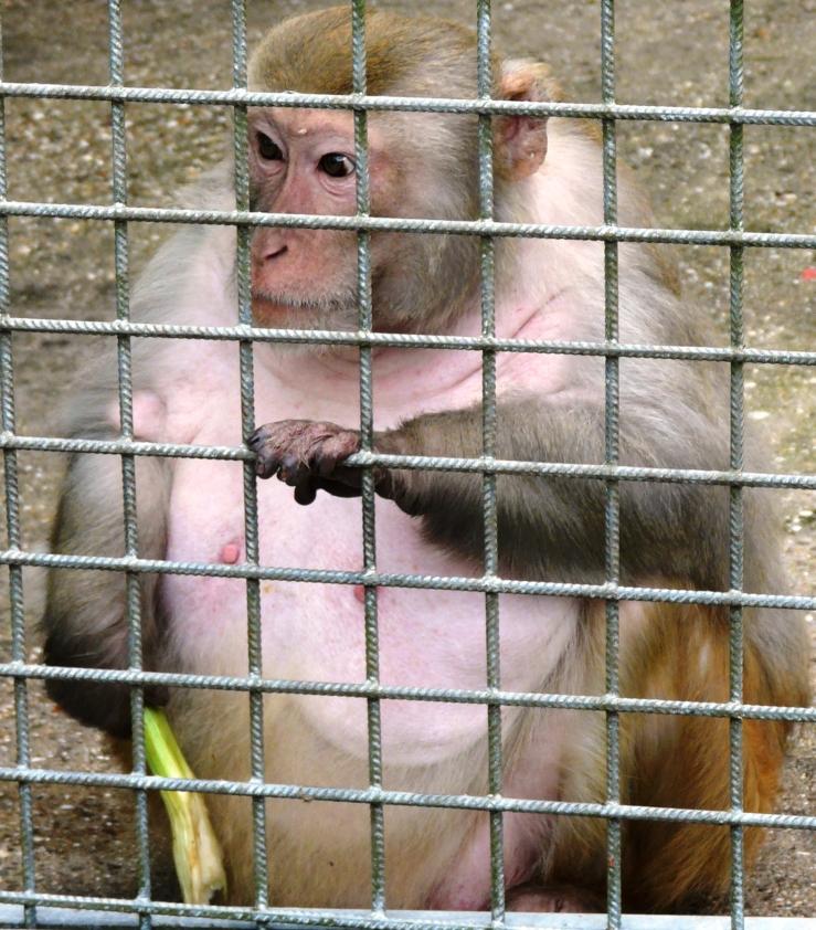 Affe im Recklinghäuser Zoo