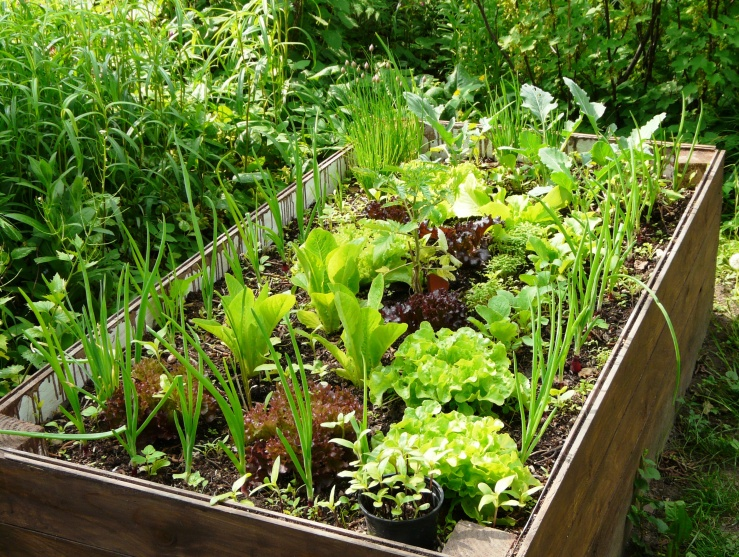 Michkulturen in unserm Garten