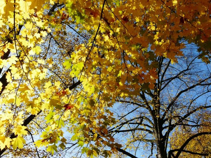 Herbst im Schlosspark Westerwinkel