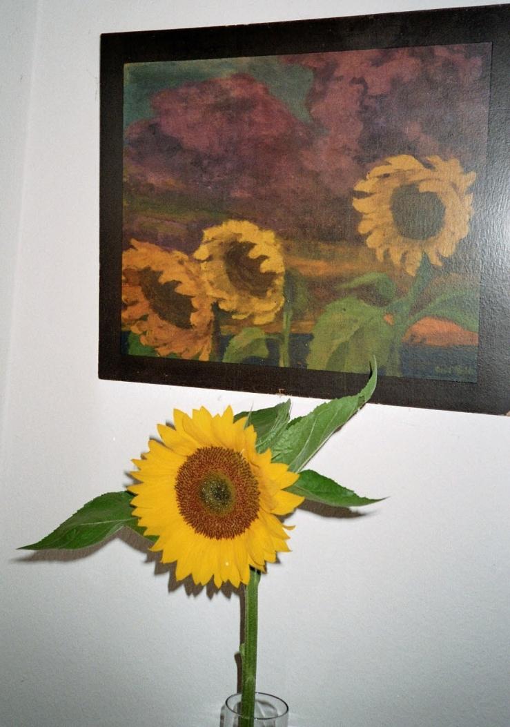Noldes Sonnenblumen