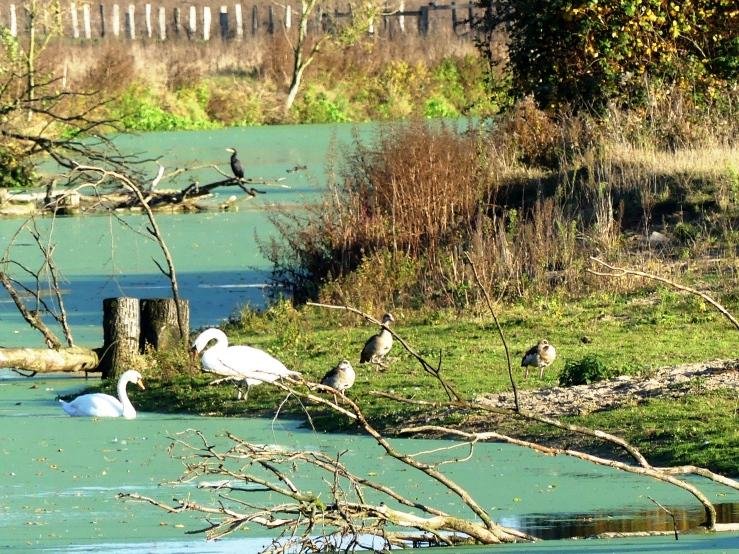 Flussvögel