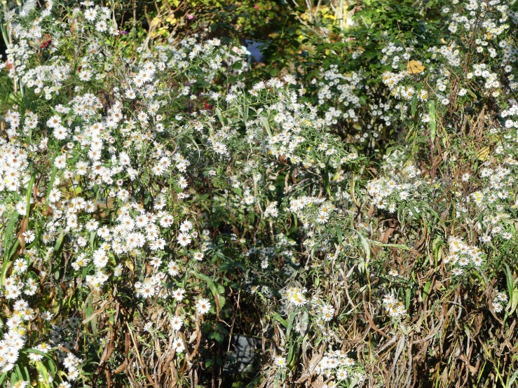 Spätherbst in unserm Garten -2-