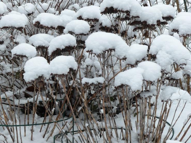Später Winter in unserm Garten am 31.01.2019 -5-