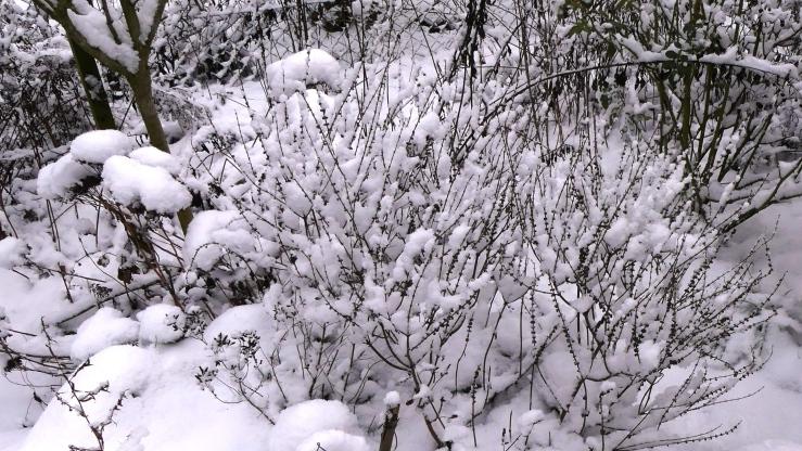 Später Winter in unserm Garten am 31.01.2019 -7-