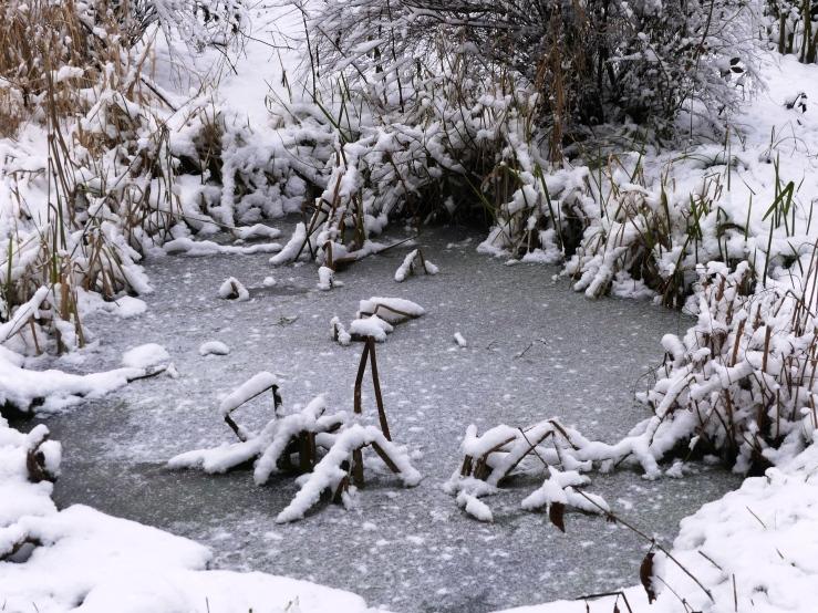 Später Winter in unserm Garten am 31.01.2019 -8-