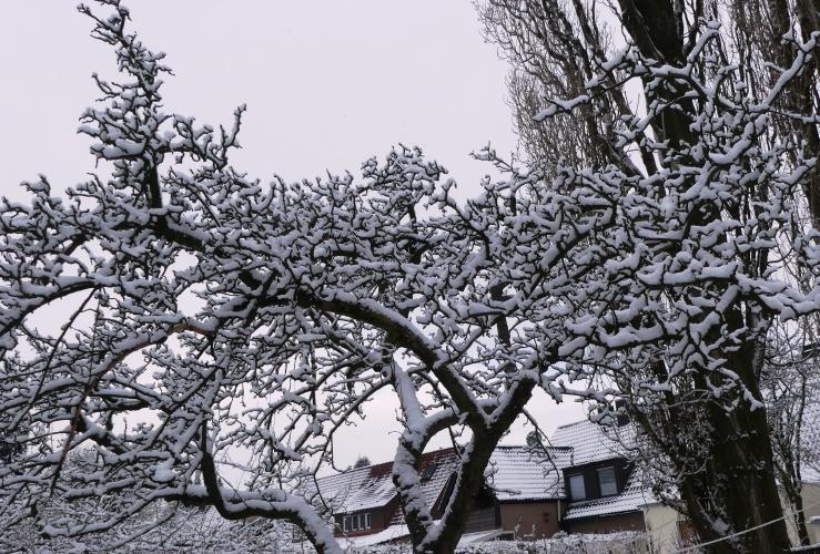 Später Winter in unserm Garten am 31.01.2019 -9-