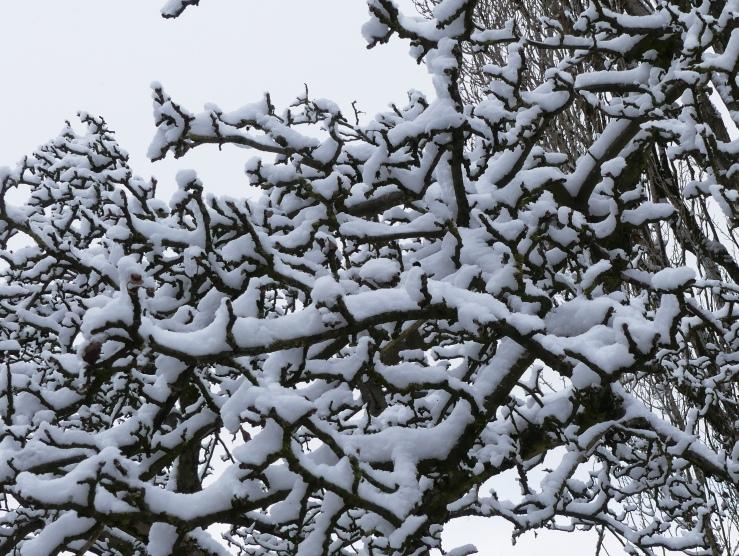 Später Winter in unserm Garten am 31.01.2019 -10-